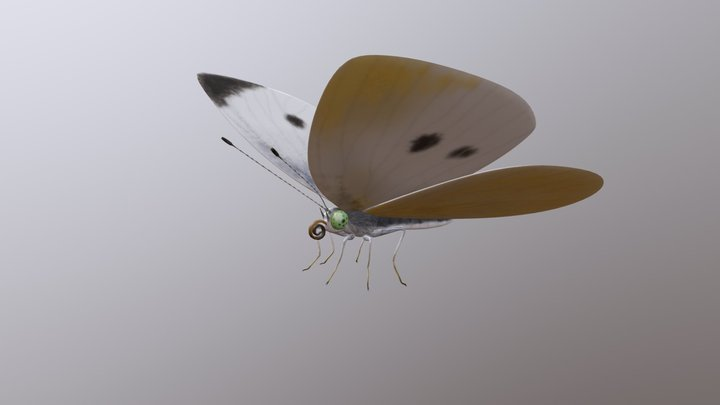 Cabbage Butterfly 3D Model