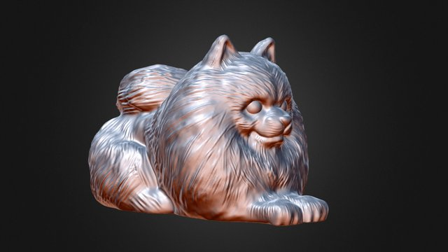Pomeranian - Details 3D Model