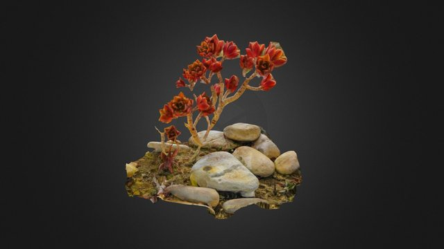 Red plant 3D Model