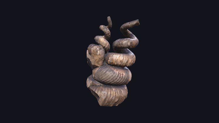 Didymoceras stevensoni Weston County, WY 3D Model
