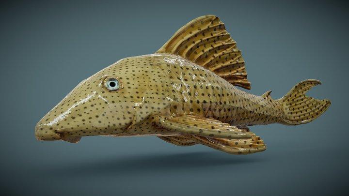 Hypostomus / Coroncoro 3D Model