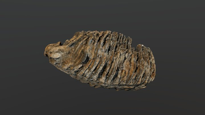 Fossil Mammoth Tooth 3D Model
