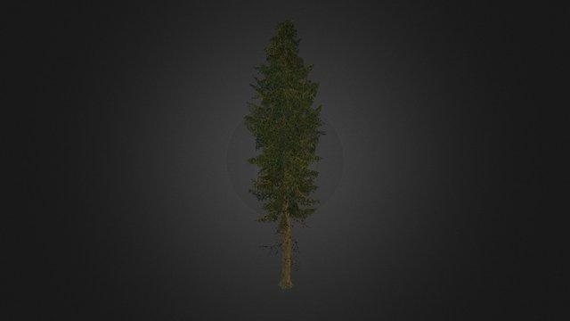 Tree spruce .2 3D Model