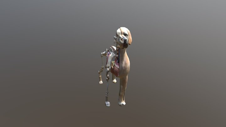 Dog Anatomy 1 3D Model