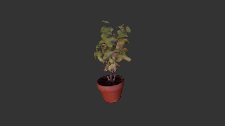 Plante-08 3D Model