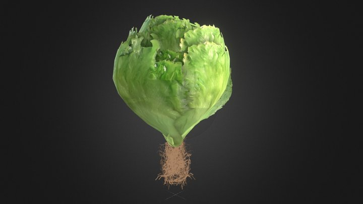 Low poly lettuce with roots 3D Model