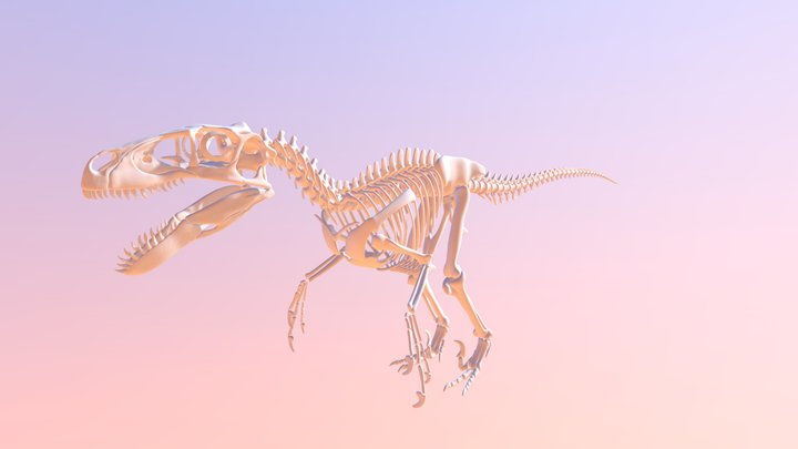 Utahraptor Skeleton 3D Model