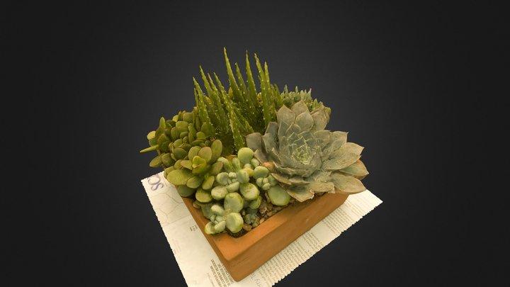 Succulent Garden 3D Model