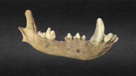 Lower Jaw Bone 3D Model
