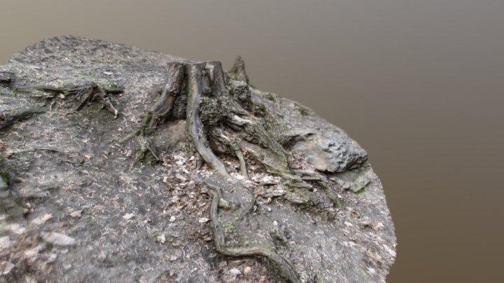 Tree stump in the slope 3D Model