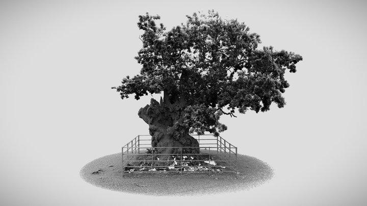 Old oak tree in the grounds of West Dean Gardens 3D Model