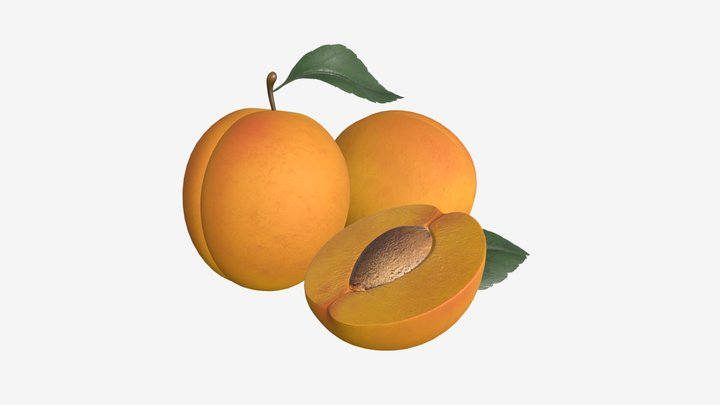 Apricot fresh and cutted off fruit with leaf 3D Model