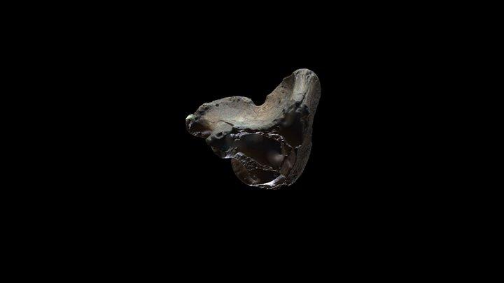 Machacador (Transversaly Broken Bone Tool) 3D Model