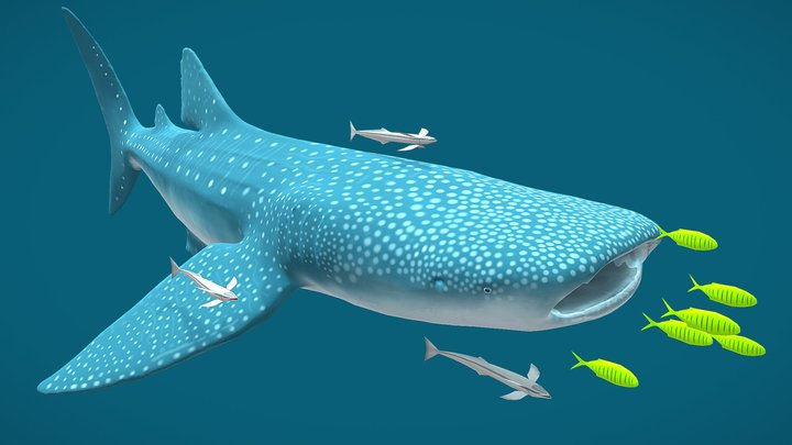 Whale Shark - First Animation 3D Model