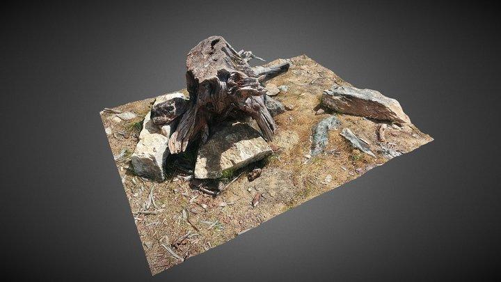 Tree Photogrammetry 3D Model