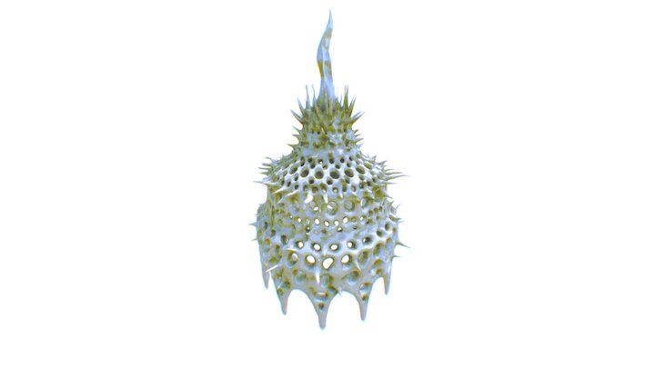 Radiolarian: Cortinetta tripodiscus 3D Model