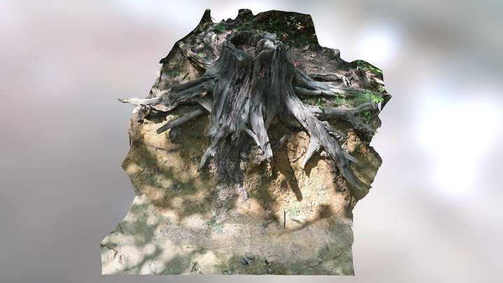 Aaron's Stump 3D Model