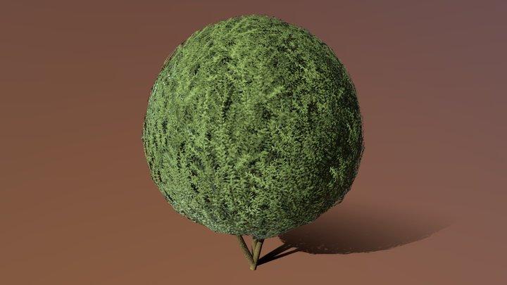 Boxwood Tree Version 6 3D Model