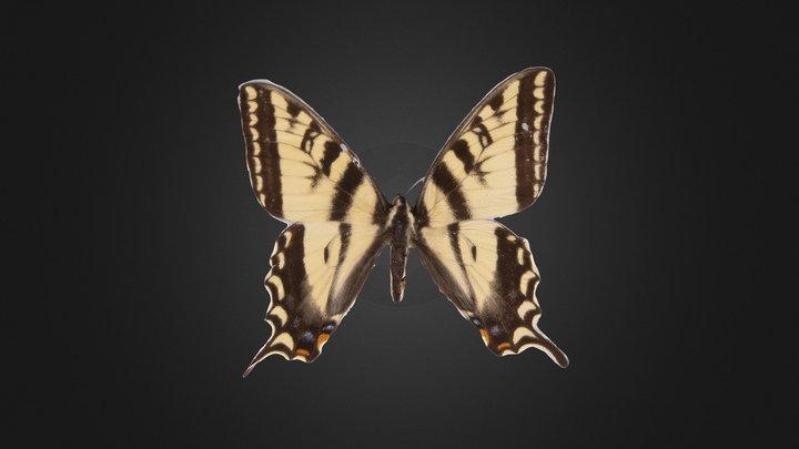 Tiger Swallowtail 3D Model
