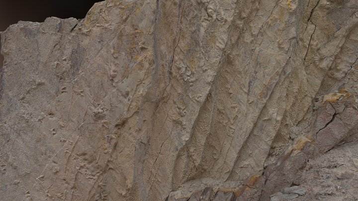 Ignotornis Cretaceous Bird Fossil Tracks 3D Model