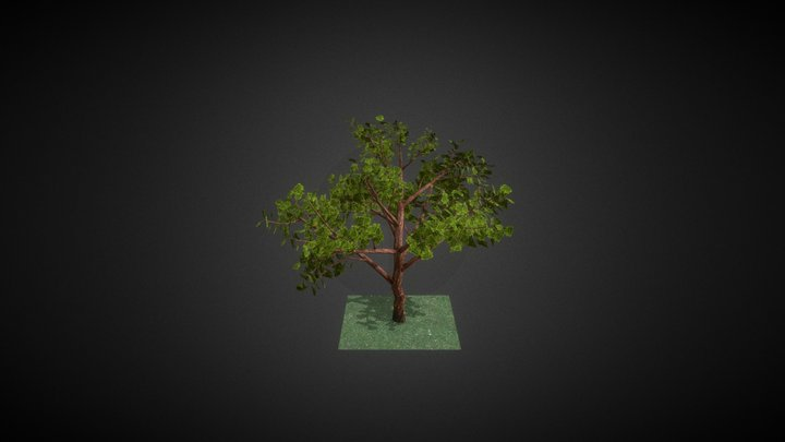 Japanese_Maple_Individual_Export 3D Model