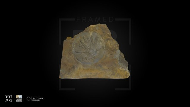 Starfish Fossil 3D Model