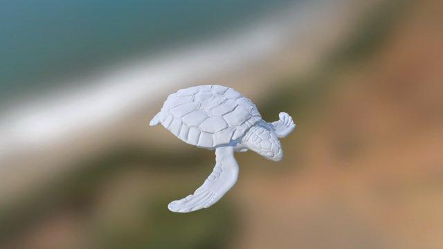 Flatback Turtle WIP 3D Model