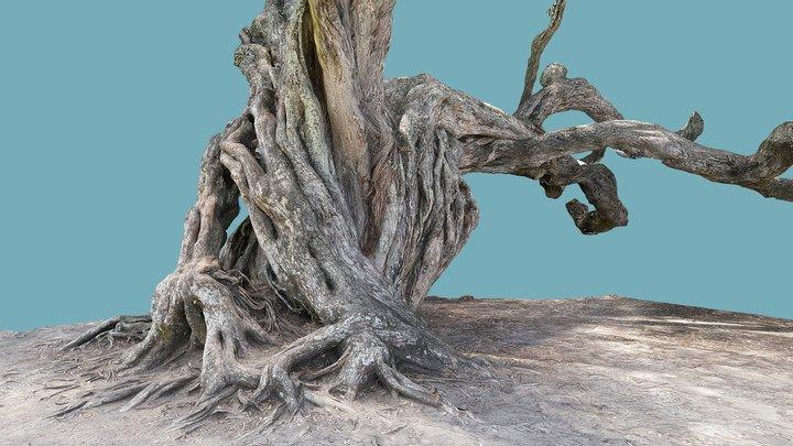 Pohutuwaka tree closeup 2 3D Model