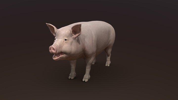 Pig V3 3D Model