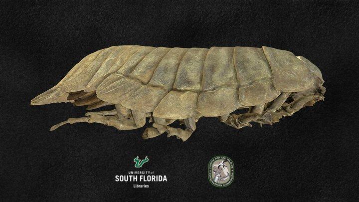 Bathynomus giganteus (Giant isopod) 3D Model