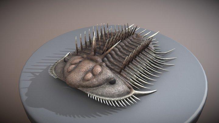 trilobite - Odontopleura ovata 3D Model