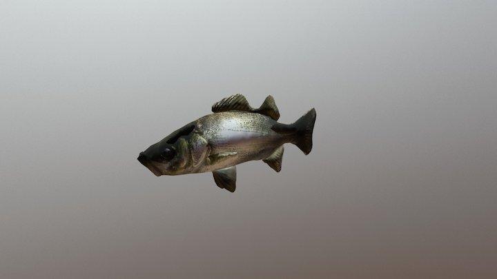 "Fish ""Seabass"" ver.0.2 3D Model"