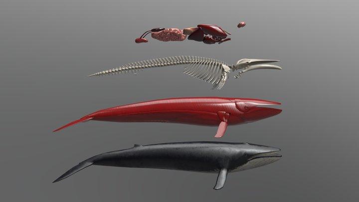 Whale Breakdown (stacked) 3D Model