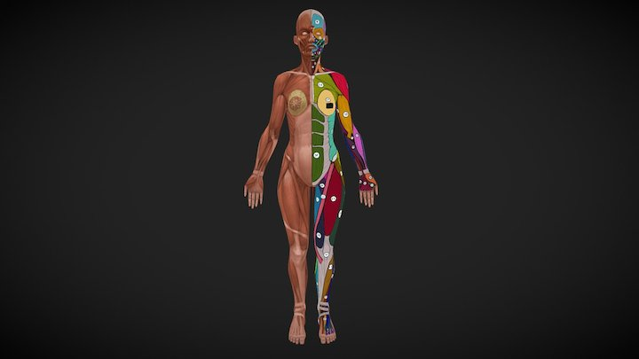 female anatomy_2 3D Model
