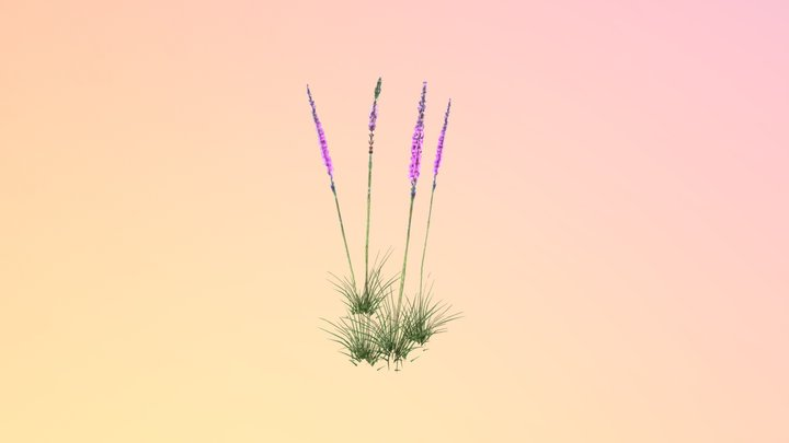 Blazing Star (Liatris tenuifolia) 3D Model