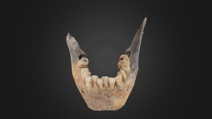 "Mandible ""Ponferrada Uno"" 3D Model"