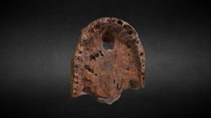 Purussaurus de Ucayali (MRU 17) 3D Model
