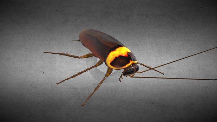 Cockroach 3D Model