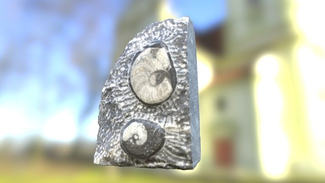 Marble Fossil 3D Model