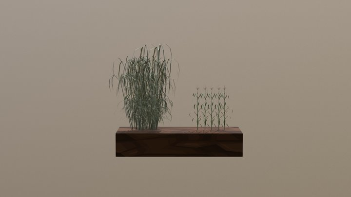Miscanthus vs Corn 3D Model