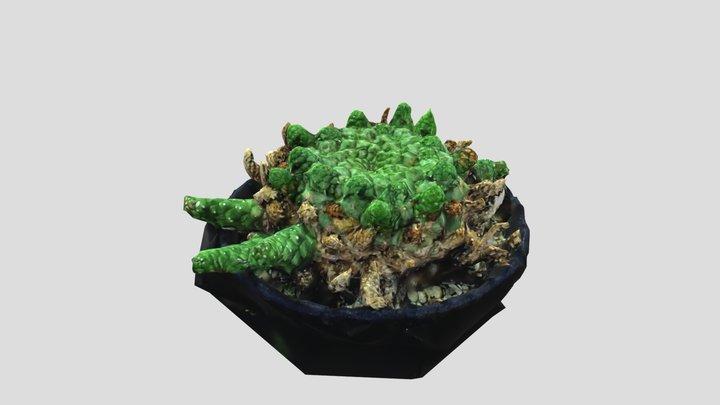 Euphorbia gorgonis 1/23/2021 3D Model
