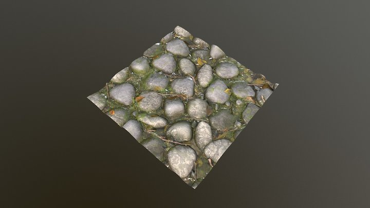 Rocky Forest Floor Texture 3D Model