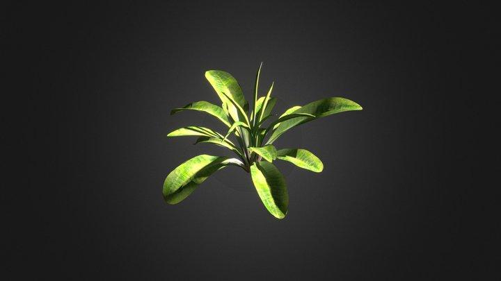 Light Scattering (the Grass Essentials) 3D Model