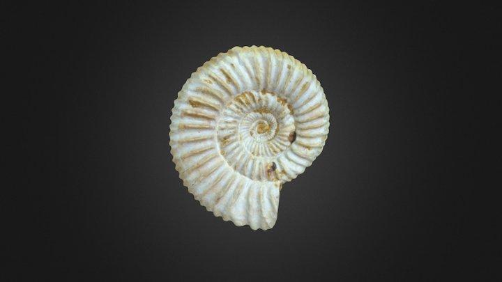 Perisphinctes sp. 3D Model