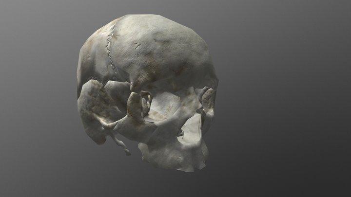 Exploding Skull Model 3D Model