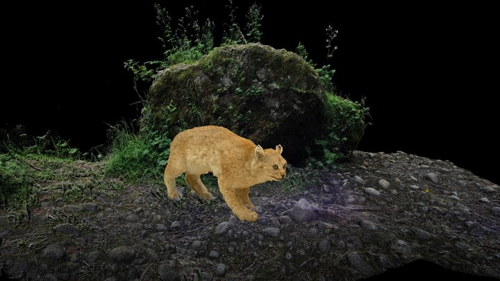 Lynx | The Forest and it's Inhabitants 3D Model
