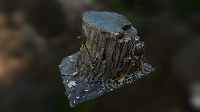 Scanned tree stump, simplified to 250k poly 3D Model