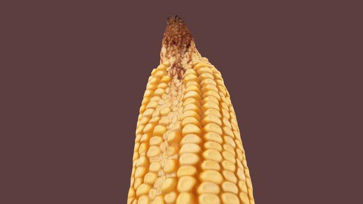 """Corn exhibiting """"zipper ear"""" 3D Model"""