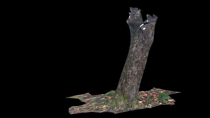 Apfelbaum1 3D Model