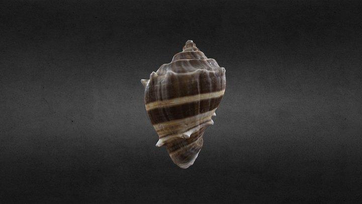 Shell 3D Scan 3D Model